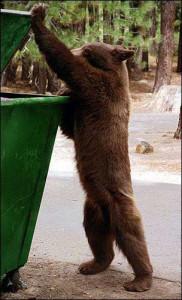 bear-disposal